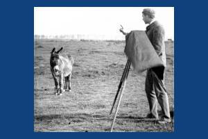 Donkey and photographer on Mitcham Common