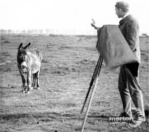 Donkey and photographer on Mitcham Common