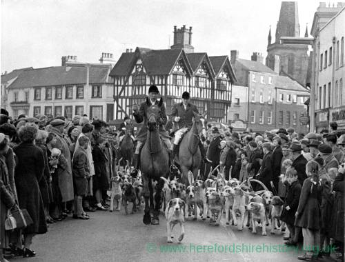 Horses and hounds attracting a crowd in High Town, Hereford.