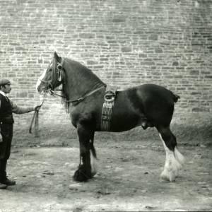 G36-005-01 Stallion (Large cart horse with handler).jpg