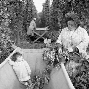 Baby Looks up at Mother Picking Hops into the Crib, Withington, Herefordshire, 1968