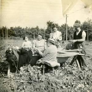 CJS024 Hop picking, c.1930s.jpg