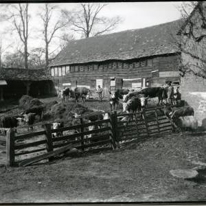 G36-020-03 Farmyard with long-horn cattle and two men with goat and donkey in foreground.jpg