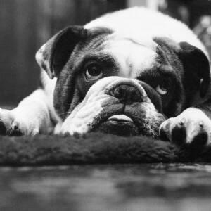 "328 - ""My Dog!"""
