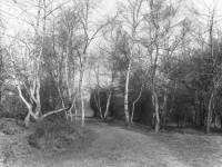 Woodland scene, Wimbledon Common