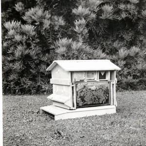Glass sided demonstration hive