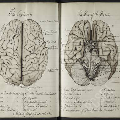 David Middleton Greig, Notebook from Lectures of Professor of Anatomy, William Turner, 1881