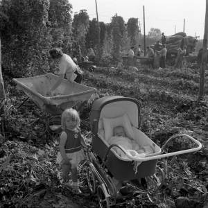 Little Girl with a Baby in a Pram in a Herefordshire Hop Yard, 1966