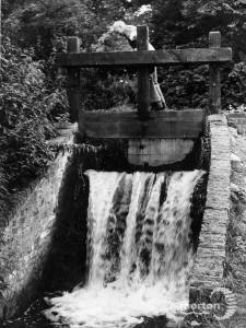 Wandle: Watermeads