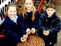 St. John Fisher School: Merton Millenium Woodland Project