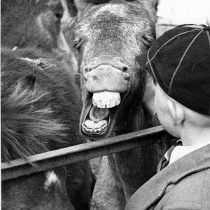 Pony pulls funny face