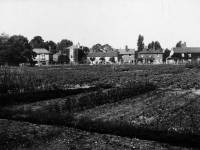 Allotments on Wimbledon Common