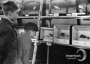 Mitcham Caged Bird Show