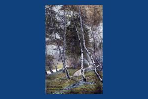 Wimbledon Common: Silver Birches