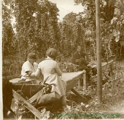 CJS004 Hop picking, c.1930s.jpg
