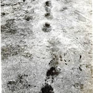 Mysterious Footprints, Colwall Beacon