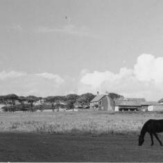 A Farm Near Whitburn, South Shields