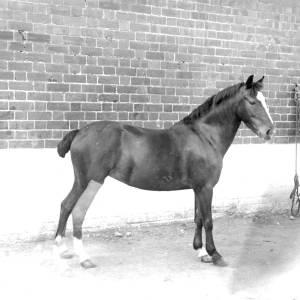 G36-244-17 Pony standing in yard .jpg