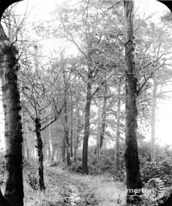 A tree lined avenue on Mitcham Common
