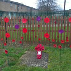 2020 Poppies in the Remembrance Garden at Hawthorn Park Community Primary School Houghton Regis