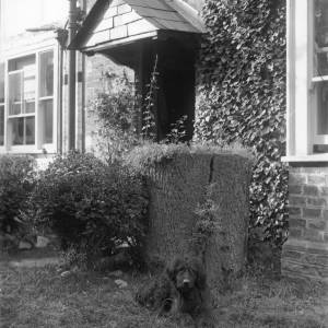 G36-308-15 Small dark rough coated dog in garden in front of house.jpg