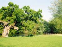Cannon Hill Common Lake (North end)