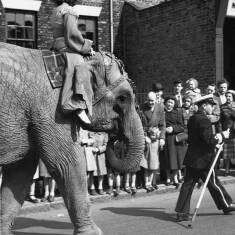 Elephant With a Rider In Billy Smart's Circus Parade, South Shields