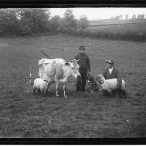 G36-083-09 Cow, two lambs, dog, with elderly man and woman in field.jpg