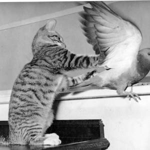 A cat trying to catch a pigeon.