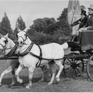 263 - Two white horses pulling carriage with two men in costume