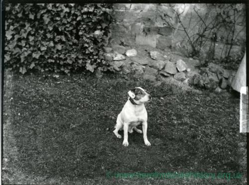 G36-014-11 Dog on lawn (terrier).jpg
