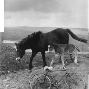 191 - Mare and foal with bicycle in foreground