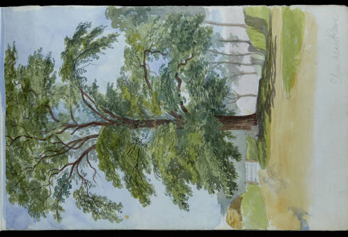 Page 8 of sketchbook 6, Elm near Rewe, Devon