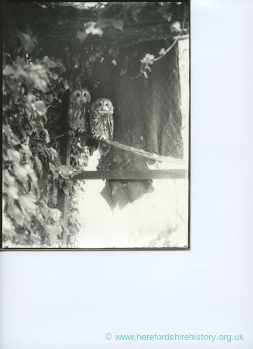 G36-019-05 Two owls, a closer view.jpg