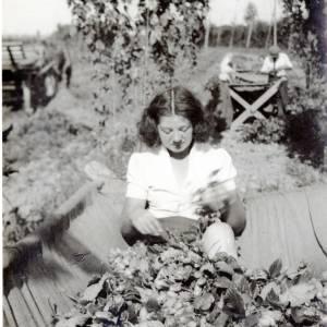 Hop Picking, c1930