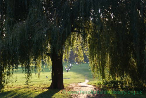 Willow Trees on the River bank