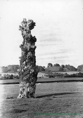 Abbey Dore, old elm, 1923