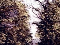 Morden Road: Trittons Corner