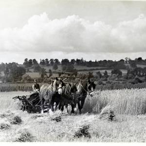 Harvesting in the Lugg Valley, c1940