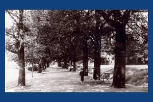 Wimbledon Common: The Avenue