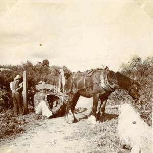 CJS029 Horse and cart.jpg