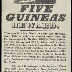 Five Guineas Reward
