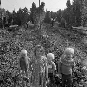 A Group of Children in a Hop Yard in Herefordshire, 1966