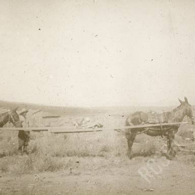 Transporting the Wounded on Stretcher by Horses