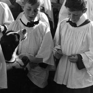 Choristers at the Holy Trinity church pet service in Hereford.