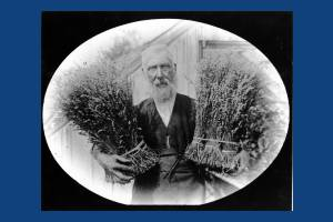 Mr.Fowler, Lavender seller