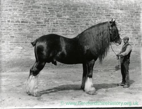 G36-005-02 Stallion with handler. Full mane .jpg