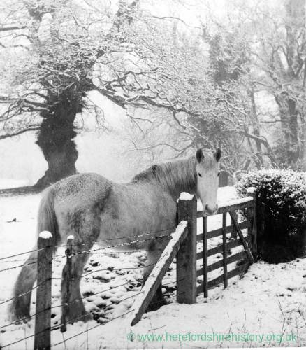Horse by fence in snow