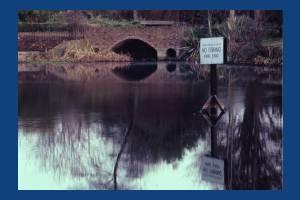 The Canons Carp pond