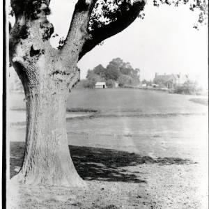 Thruxton, Oak Tree and Mound